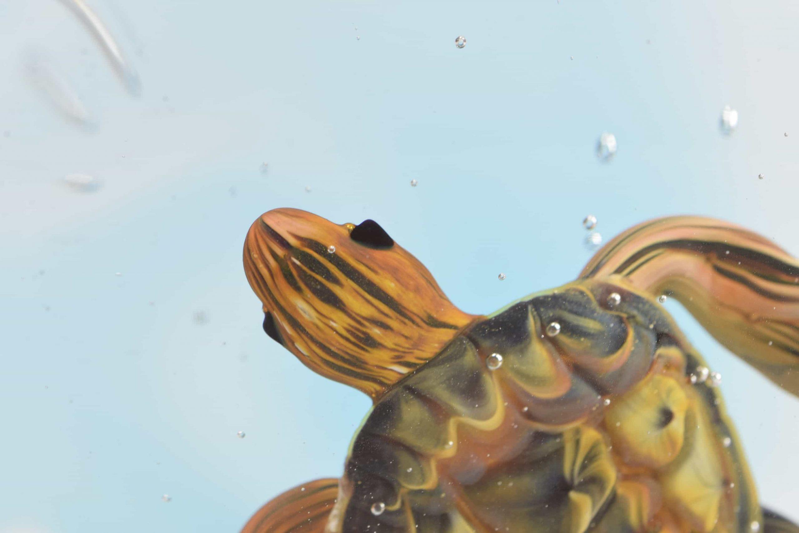 Aquarium mit Schildkröte